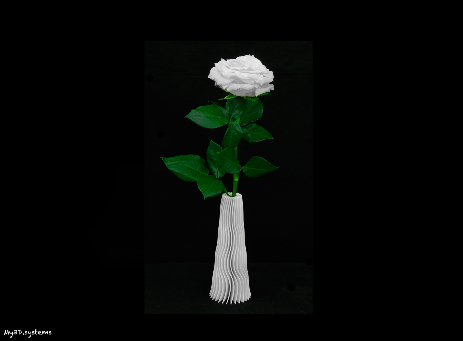 _DSC7154-vaso-1600.jpg